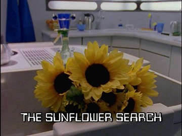 "Title Card for ""The Sunflower Search""."